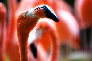 flamingo head PD