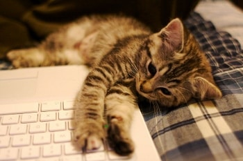 kitten on laptop by Ryan Forsythe